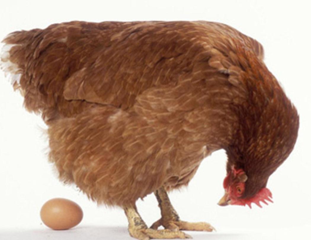Service Design und Plattformen - was ist die Henne, was das Ei?